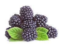 Mulberry 50ml (BN 050820)