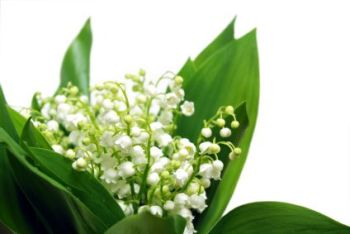 Lily Of The Valley 50ml (BN 6364)