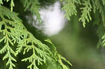 Velvet Cedar Fragrance Hand Sanitiser Spray Base 90% Alcohol 500ml *UK DELIVERY ONLY*