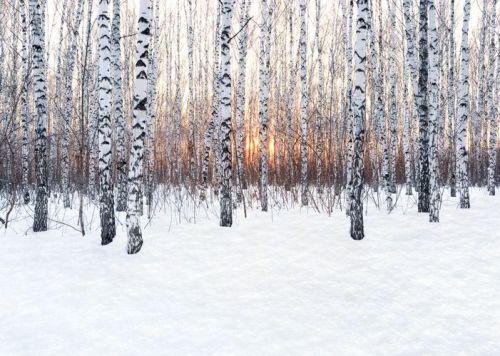 Crackling Birch US 50ml (BN 719603)