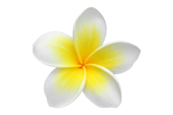Plumeria US 50ml (BN 625062)*(NOT FOR EU COSMETIC USE)*