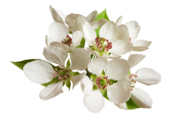 Apple Blossom 50ml (BN 3770)