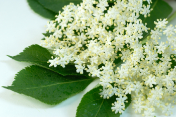 Elderflower 200ml (BN 00057)