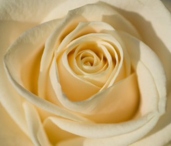 Oriental Rose 50ml (BN 2731)
