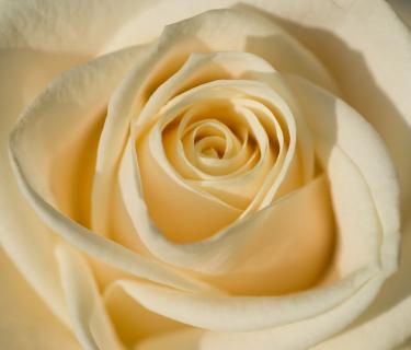 Oriental Rose UK 50ml