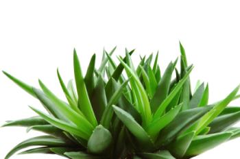 Aloe Vera 50ml (BN 4198)