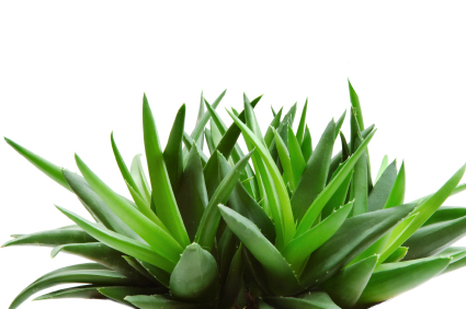 Aloe Vera UK 50ml