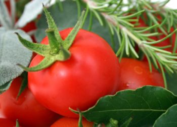 Tomato Leaf 50ml
