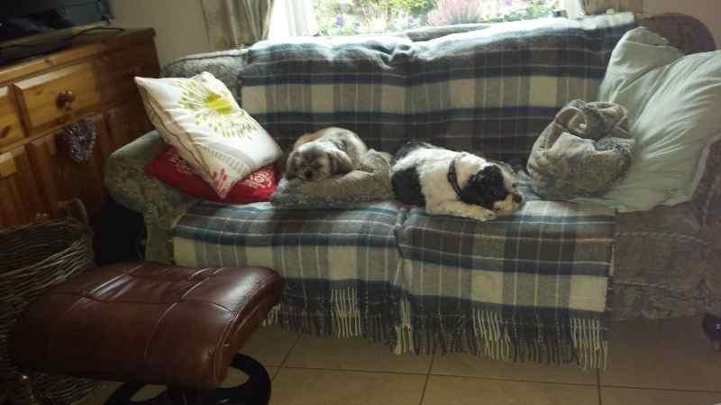 k9 kutz huddersfield doggie daycare time for a nap