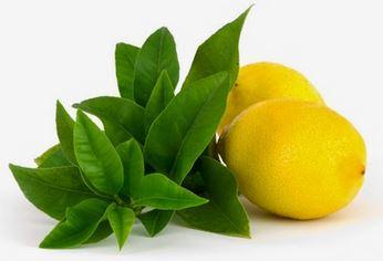 lemon picture