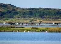 Wildlife Walk - 21st August - 10-11.30am