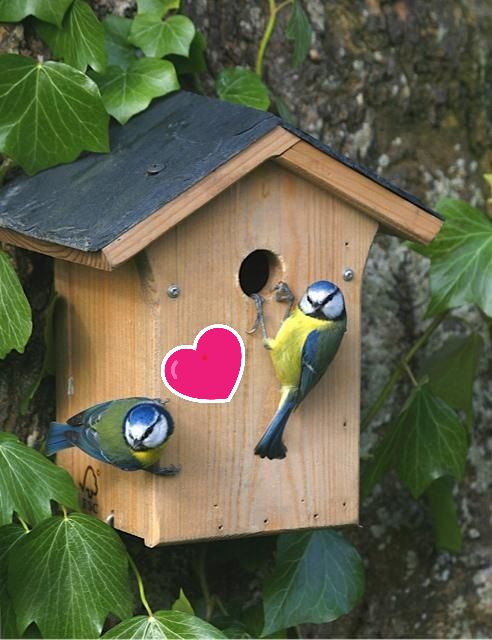 Valentines nest box special - Saturday 16th February - 10am-12pm