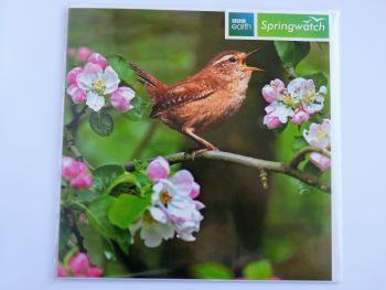 Springwatch- wren