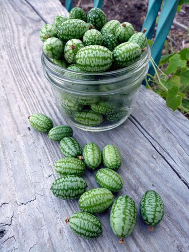 cucamelon - pre order delivery end of May