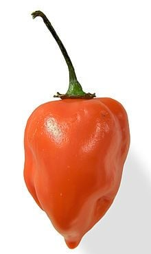 Habanero red -  pre order delivery from  mid April
