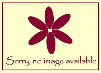 Eryngium x zabelii Violetta - 9cm pot
