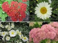Hot & Dry Collection 9cm - 5 plants