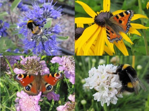 9cm Bee & Butterfly Collection - 5 plants