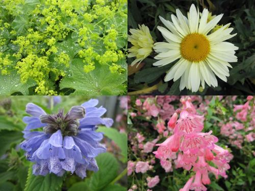 9cm Herbaceous Perennial Collection - 5 plants