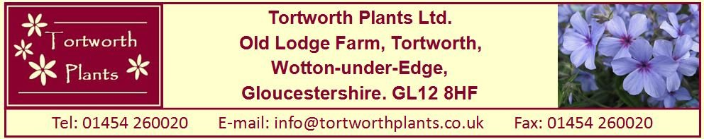Tortworth Plants Ltd., site logo.
