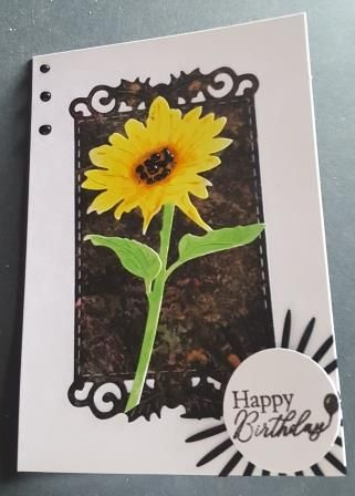 GC 2019 - Birthdays - Sunflower on hand coloured bg frame C6 white cards Ha