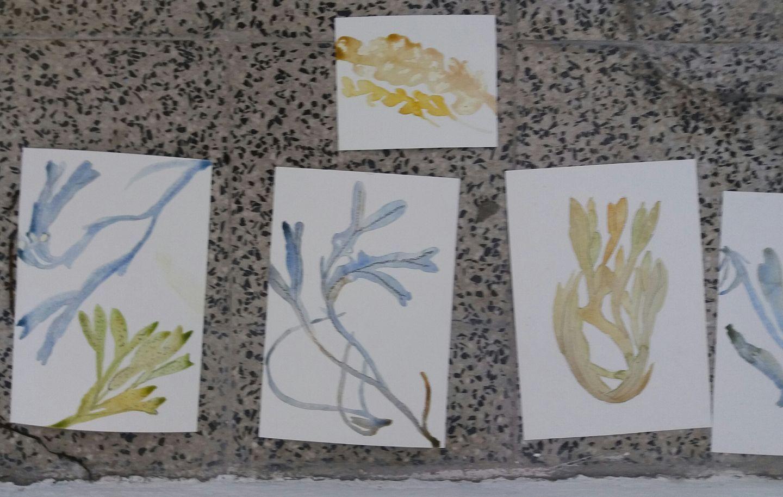 watercolour seaweed1