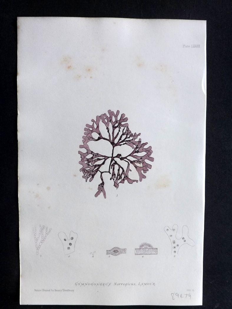 seaweedprint
