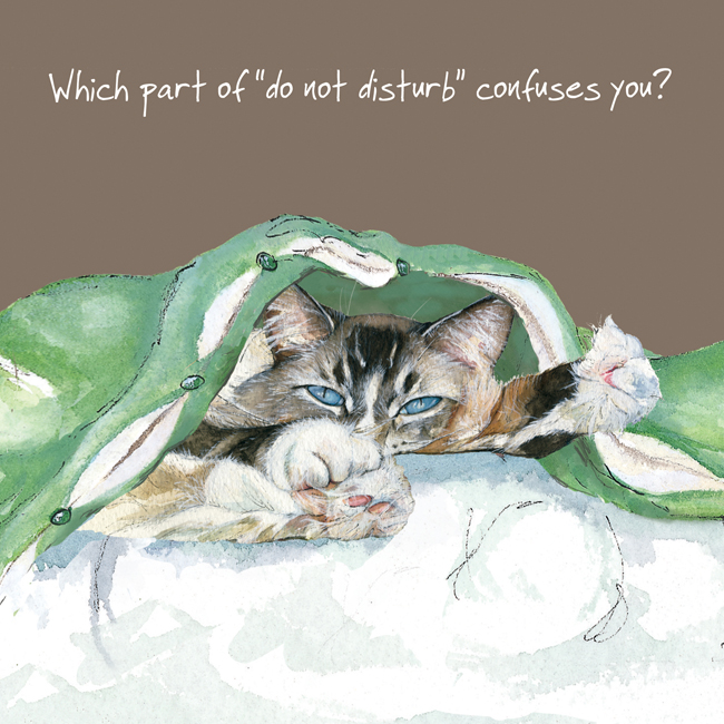 Open / Blank Cat Greeting Card - Confuses You