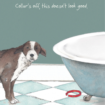 Open / Blank Dog Bath Greeting Card - Doesn't Look Good