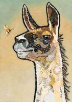 <!-- 043 -->Llama Rodney - Medium Print