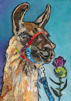 Llama Glen - Medium Print