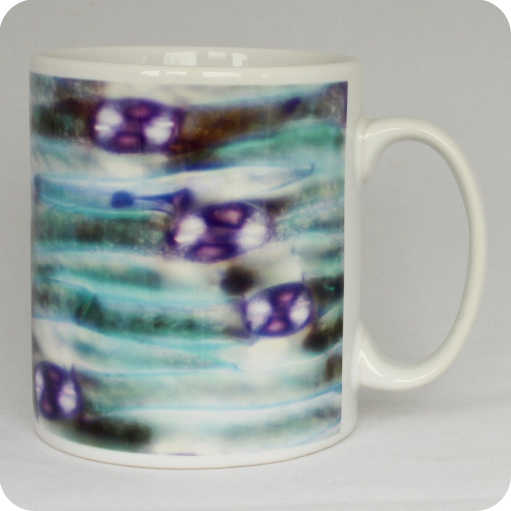 Lily leaf lower epidermis science mug (M27)
