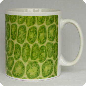 Moss 'leaf' science mug (M28)