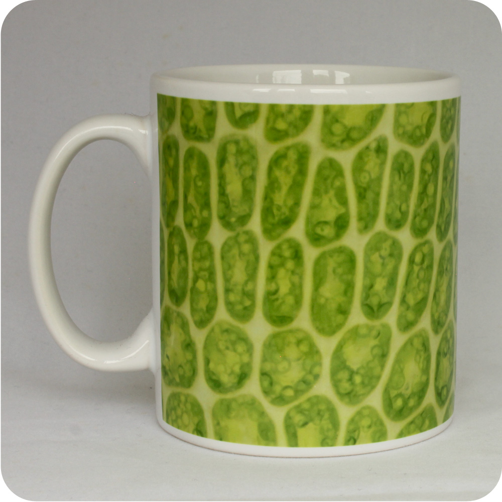 Science mugs and scientific coasters - science gifts