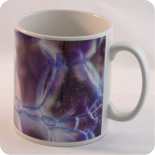<!-- 00143 -->ROSE STEM SECTION (TOLUIDINE BLUE, DARKFIELD MICROSCOPY) MUG