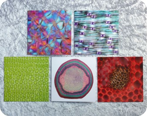 <!-- 00002 -->Five botanical plant sample microscope image cards