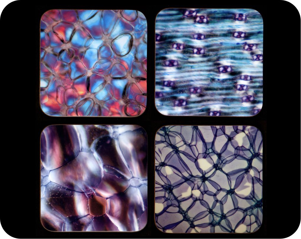 <!-- 00024 -->Four botanic plant sample microscope photo coasters (Co-Bot4)