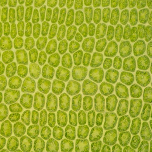 Moss 'leaf'