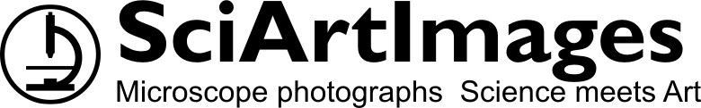SciArtImages, site logo.