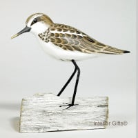 Archipelago Little Stint Standing, Bird Wood Carving