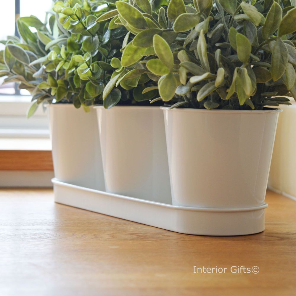 Set of Three Herb Pots on Tray in White
