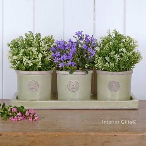 Kew Garden Set of Three Herb Pots & Tray - Royal Botanic Gardens - Grape Gr
