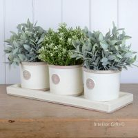 Kew Round Herb Pots & Tray - Set of Three - Royal Botanic Gardens - Ivory Cream
