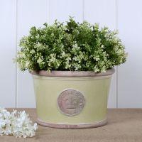 Kew Low Planter Pot Grape Green - Royal Botanic Gardens Plant Pot - Medium