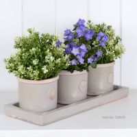 Kew Round Herb Pots & Tray - Set of Three - Royal Botanic Gardens - Almond Beige