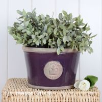 Kew Low Planter Pot Aubergine - Royal Botanic Gardens Plant Pot - Medium