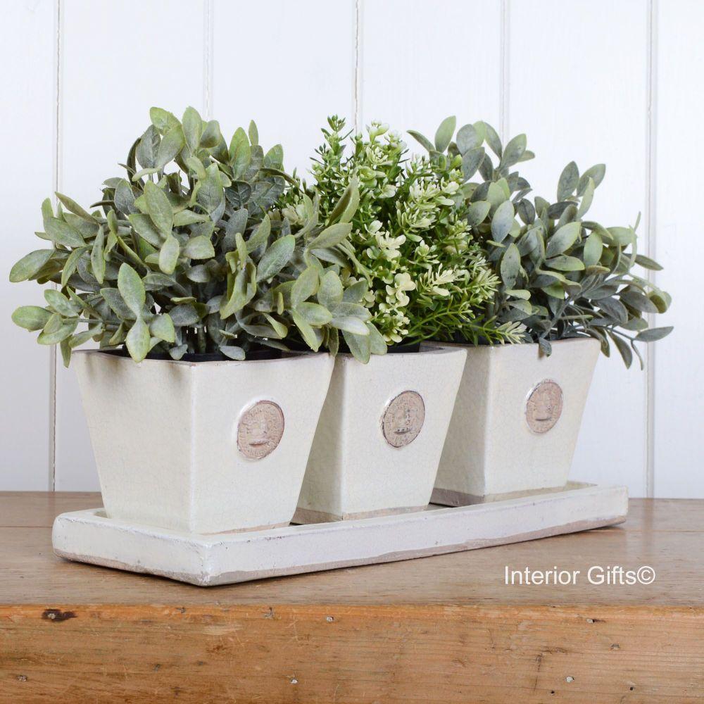 Kew Tapered Herb Pots & Tray - Set of Three - Royal Botanic Gardens - Ivory