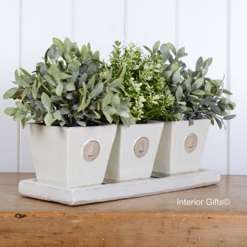 Kew Tapered Herb Pots & Tray - Set of Three - Royal Botanic Gardens - Ivory Cream