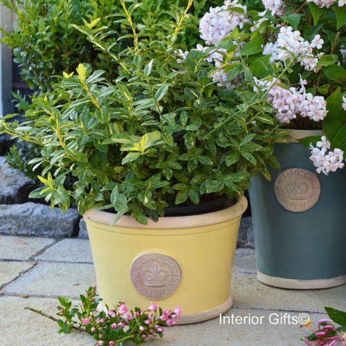 Kew Low Planter Pot Citron Yellow - Royal Botanic Gardens Plant Pot - Mediu