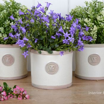 Kew Round Herb / Flower Single Pot - Royal Botanic Gardens - Ivory Cream